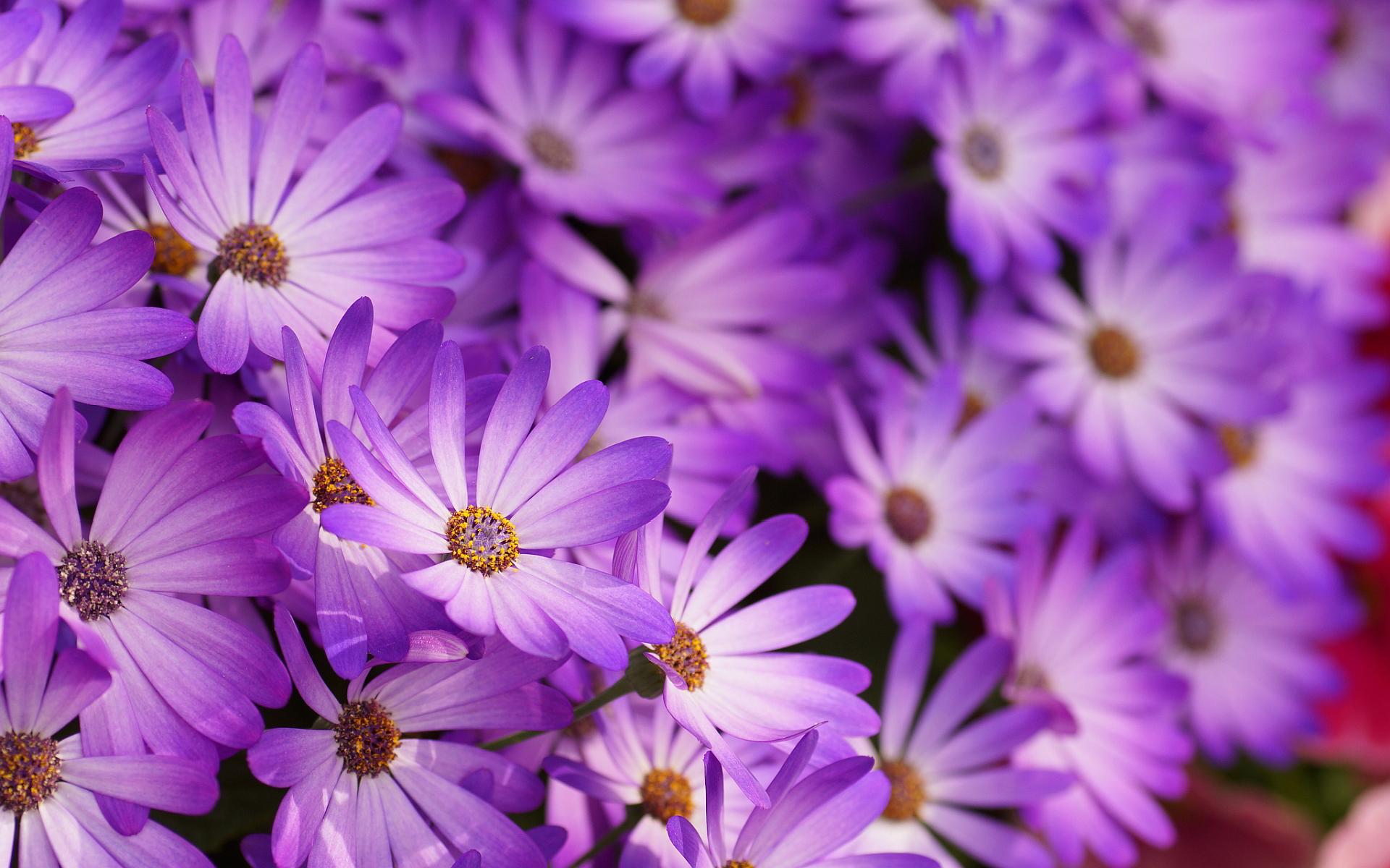 purple-flower-essence-wallpaper