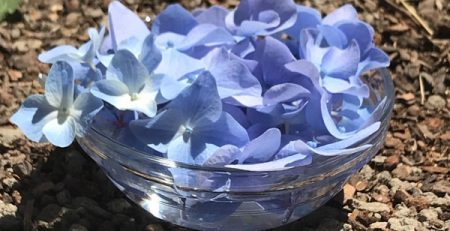How to Make a Flower Essence